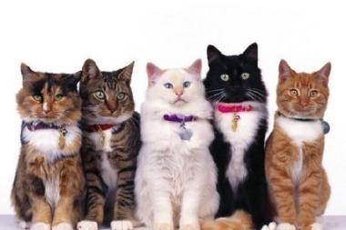 Kačių mylėtojų klubas