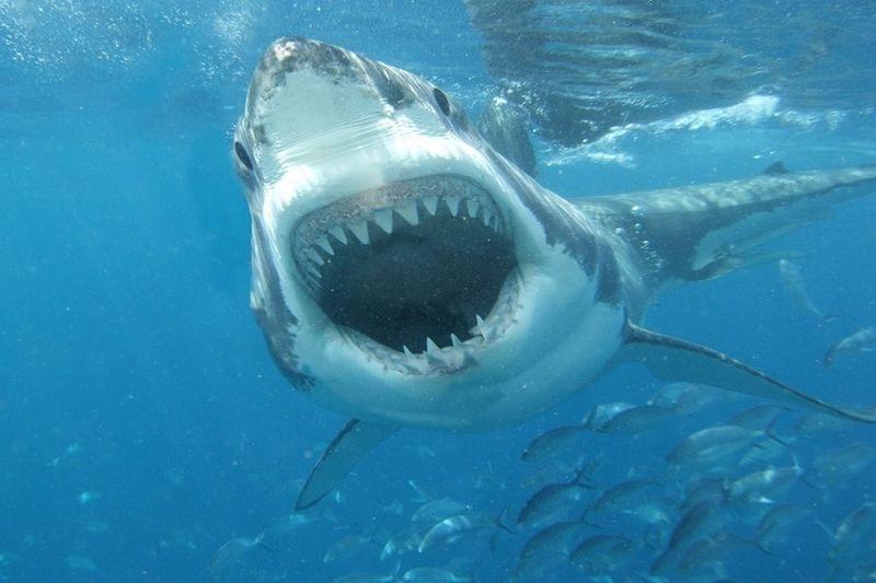 Ryklių    apetitas   primena   besotį