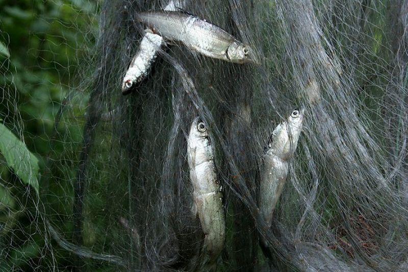 Ežeruose tirs verslinius žuvų išteklius
