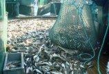 Vienos žvejybos kvotos didėjo, kitos – mažėjo