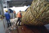 Žuvininkystės specialistai studijuos Tolimąsias jūras
