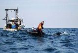 Tarp  jūros  žudikų  –  ir  banginiai